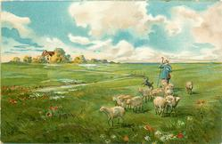 pastoral scene, shepherd & dog drives sheep front, house distant left