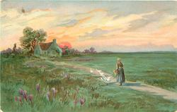 pastoral scene, woman on path feeds four white geese, house behind left