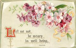 LET US NOT BE WEARY IN WELL DOING  purple/pink flowers
