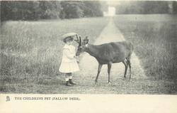 THE CHILDRENS PET (FALLOW DEER)