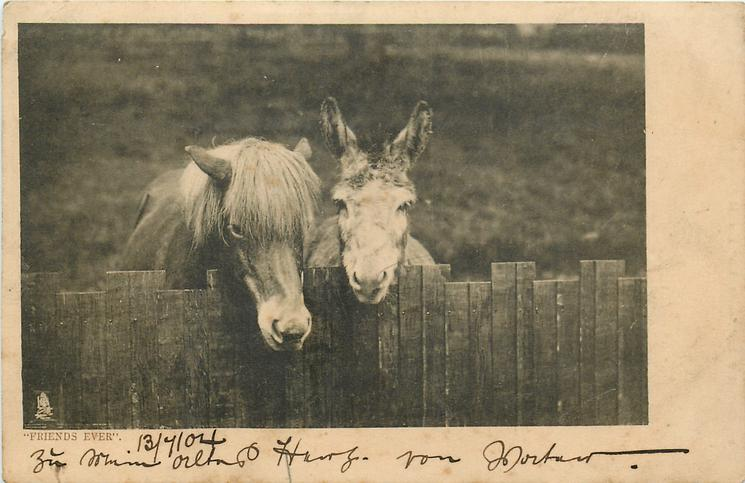 FRIENDS EVER  mule & pony