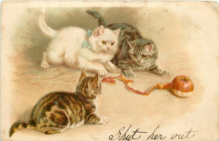 SOMETHING NEW  three kittens play, apple