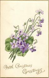 WITH CHRISTMAS GREETINGS  bunch of violets, leans to the right
