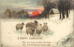 A HAPPY CHRISTMAS  5 sheep