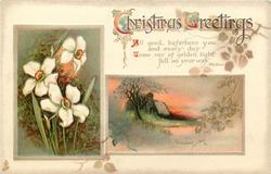 CHRISTMAS GREETINGS  jonquils, rural inset