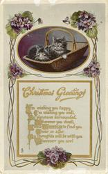CHRISTMAS GREETINGS  two black kittens with white on faces, fronts & paws, purple violets