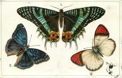 AFRICA, 1. CHRYSIRIDIA MADAGASCARIS... 3. TERACOLUS MILES, EAST AFRICA