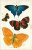 AMERICA & WEST INDIES, 1 PSEUDOLYCAENA MARSYAS... 4.LEMONIUS EMYLUIS, SOUTH AMERICA