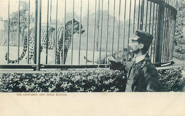 THE LEOPARDS AND THEIR KEEPER