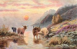 four horned bulls, two looking forward, two looking behind, sun in foreground