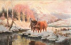 two red brown steers bending to water at creek