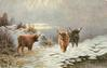 three horned bulls, two walking forward, one facing rear, water lower right, snow on ground