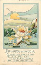 CHRISTMAS GREETINGS  rising sun behind water lily