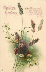 CHRISTMAS GREETINGS  lavender