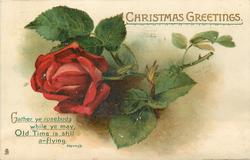 CHRISTMAS GREETINGS  red rose