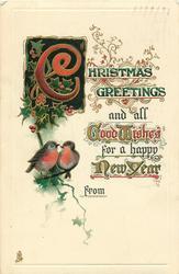 CHRISTMAS GREETINGS  two robins