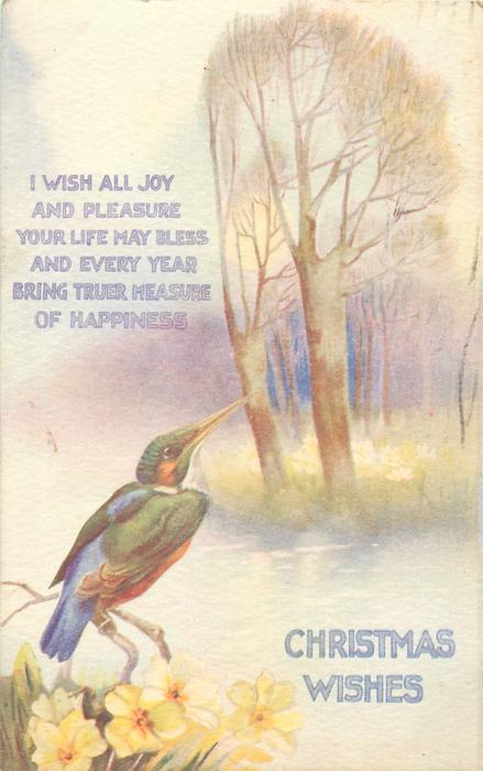 CHRISTMAS WISHES  kingfisher