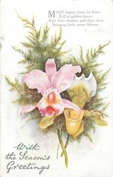 WITH THE SEASON'S GREETINGS  orchids & ferns