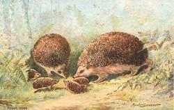 HEDGE-HOGS