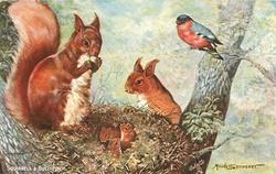 SQUIRRELS AND BULLFINCH