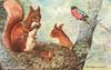 SQUIRRELS AND BULLFINCH