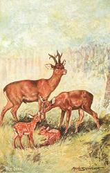 THE ROE DEER