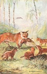 VIXEN AND CUBS