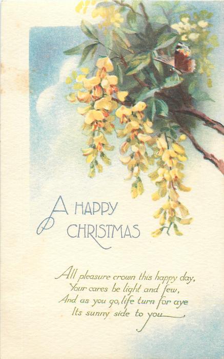 A HAPPY CHRISTMAS  yellow laburnum, butterfly