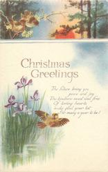 CHRISTMAS GREETINGS  iris, birds