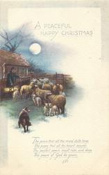 A PEACEFUL HAPPY CHRISTMAS  sheep