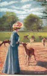 THE FAVOURITE  red deer