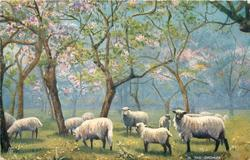 IN THE ORCHARD  sheep