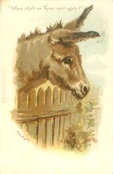 """WHEN SHALL WE THREE MEET AGAIN?""  donkey with head over fence"