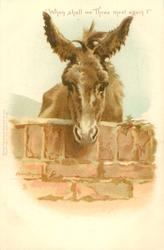"""WHEN SHALL WE THREE MEET AGAIN?""  donkey with head over wall"