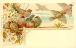 nine finches, white blossom
