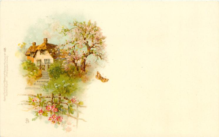 cottage and tree with pink blossoms, butterfly