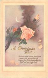 A CHRISTMAS WISH  orange roses
