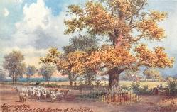 THE MIDLAND OAK (CENTRE OF ENGLAND)