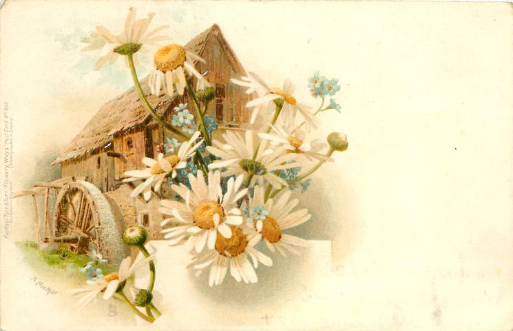daisies, inset watermill