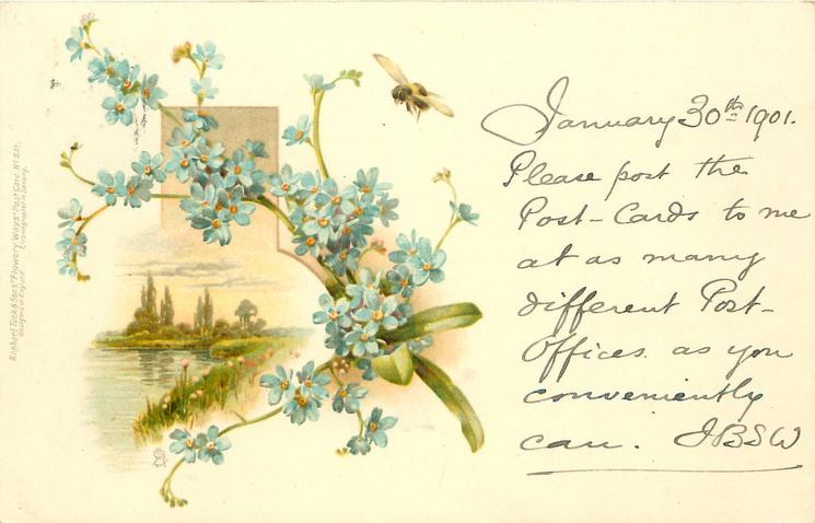 blue forget-me-nots, inset lake scene
