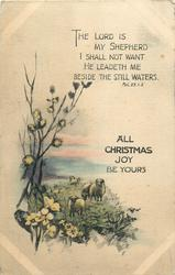 ALL CHRISTMAS JOY BE YOURS  field, sheep & flowers