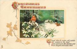 CHRISTMAS GREETINGS  two robins, snowdrops