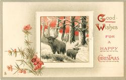 GOOD WISHES  two highland cows in snowy woods, red sky, heather below left