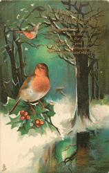 A HAPPY CHRISTMAS  two robins, one flying, holly, snowy woods