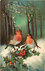A HAPPY CHRISTMAS TO YOU  two robins perch on holly, snowy woods