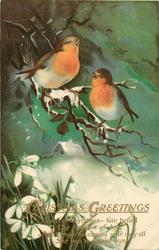 CHRISTMAS GREETINGS  two robins on branch, cottage background