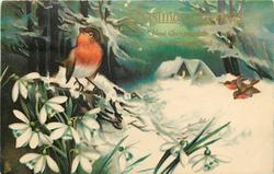 CHRISTMAS GREETINGS  three robins, two fly, snowdrops, cottage back in snowy wood