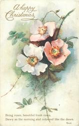 A HAPPY CHRISTMAS  pink & white dog roses