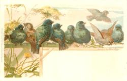 eight birds on branch and fence, one in flight