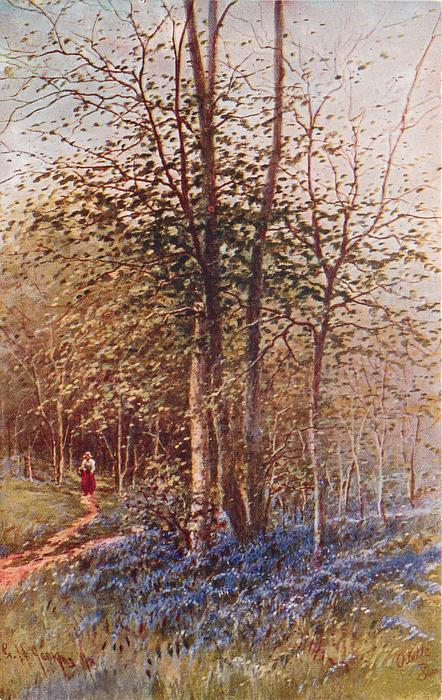 SPRING IN THE WOODS, NEAR HATCH MILL  woman on path to left, bluebells in front of silver birches